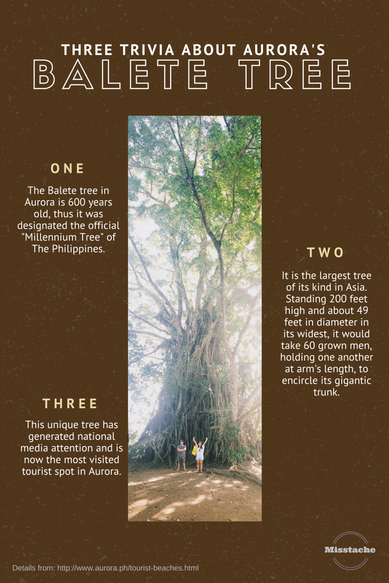 balete tree trivia