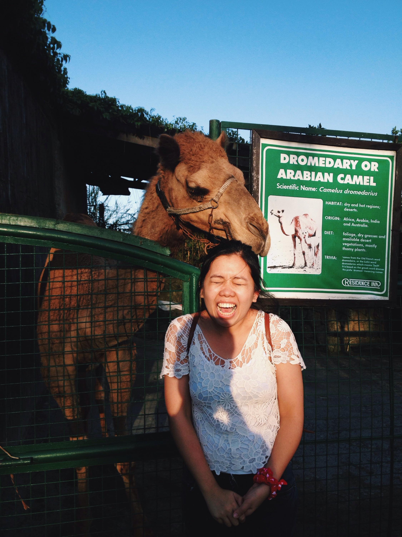 camel in tagaytay