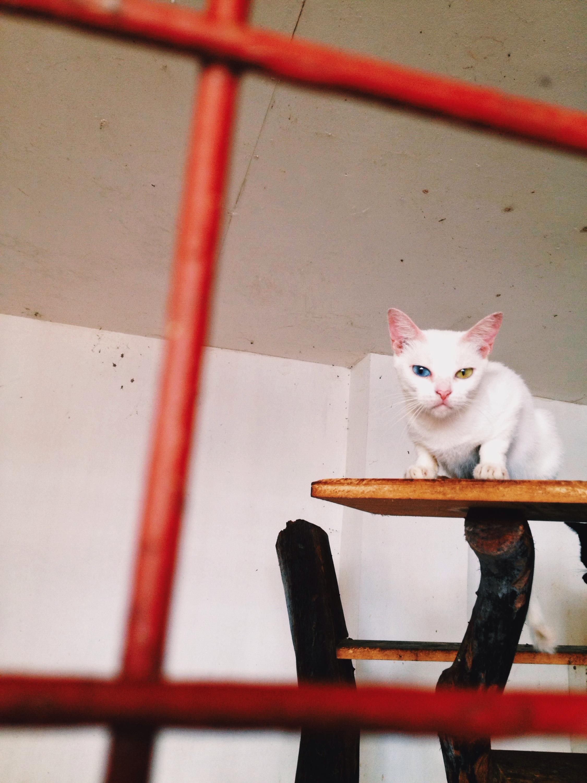 cats at AARRC