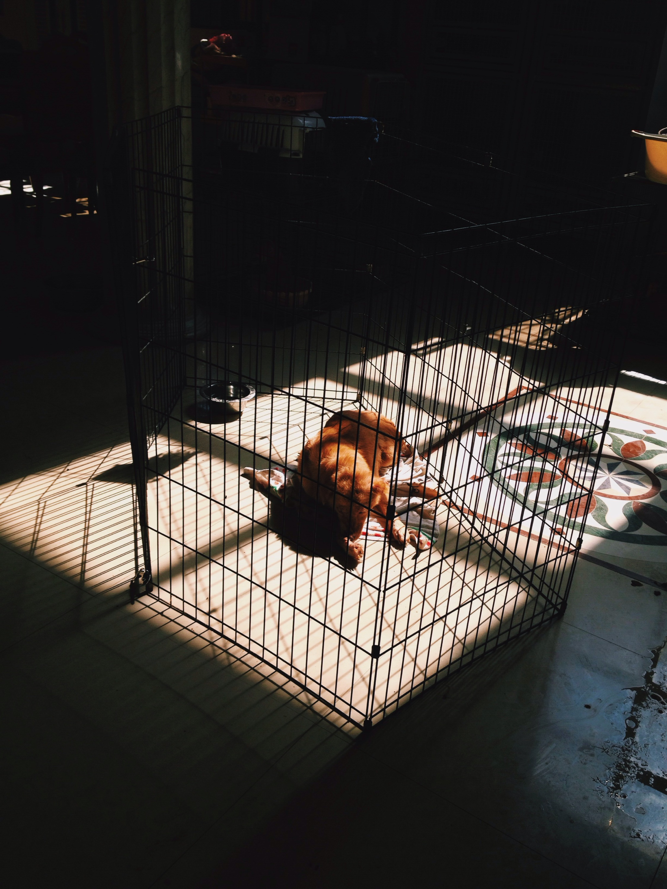dogs at aklan animal rescue and rehabilitation center