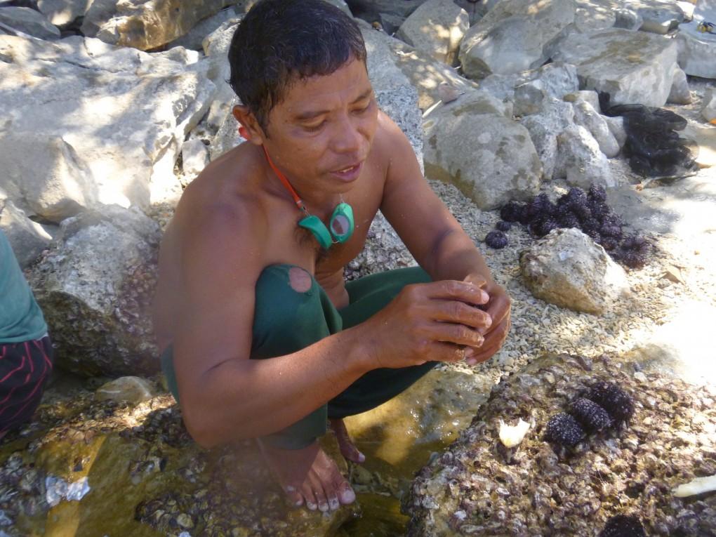 sea urchin bulalacao